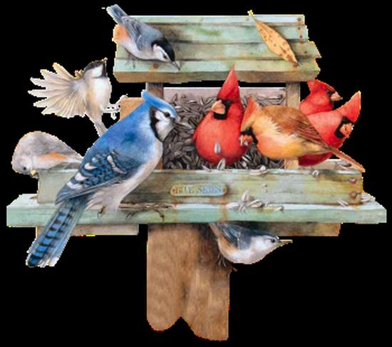 tubes_oiseaux_tiram_235