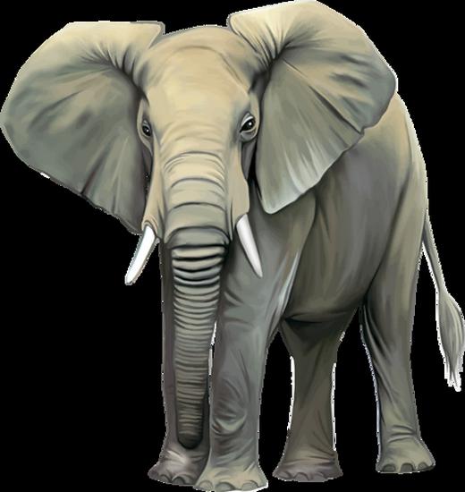 tubes_elephants_tiram_246