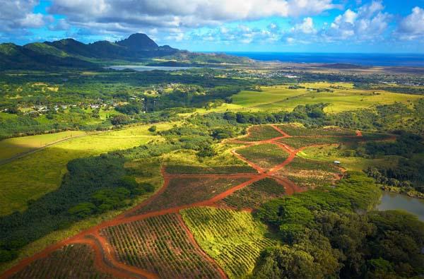 Kauai Tours