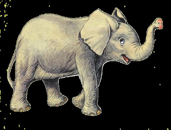tubes_elephants_tiram_431
