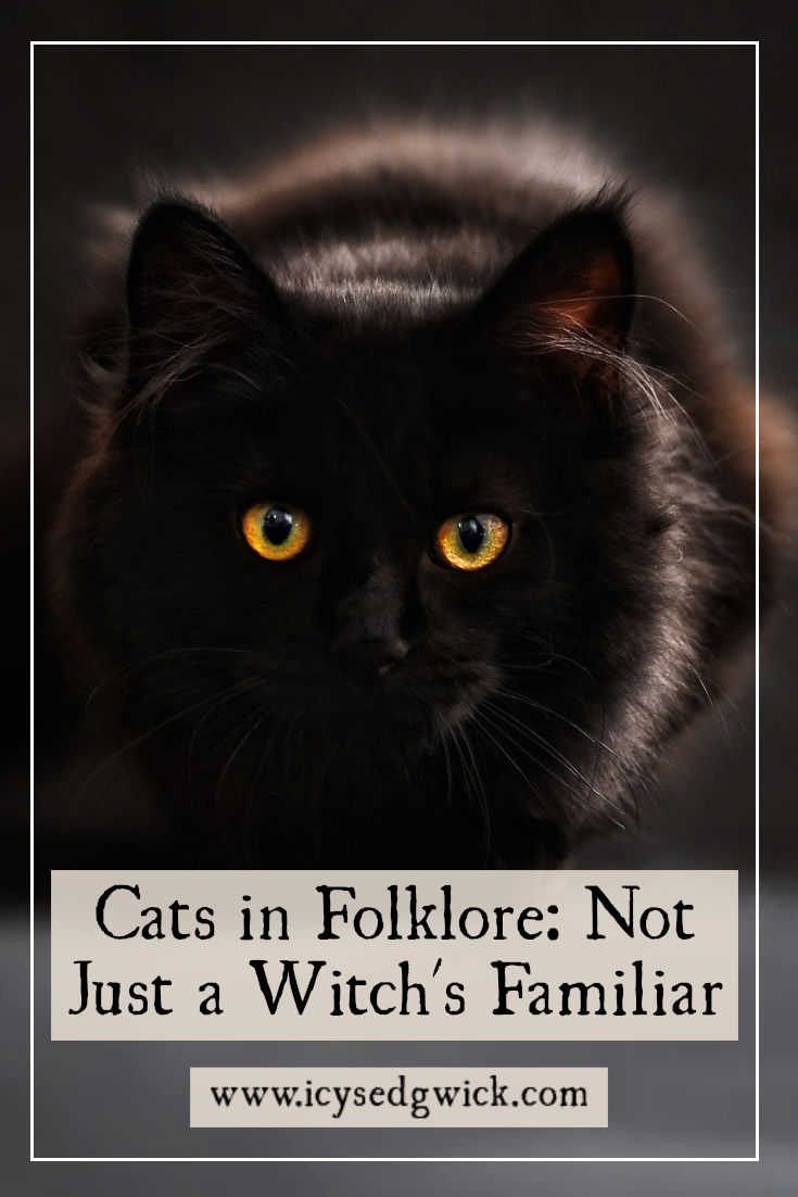 There are plenty of tales about cats in folklore. As Halloween approaches, let's look at these fascinating superstitions about our feline friends.