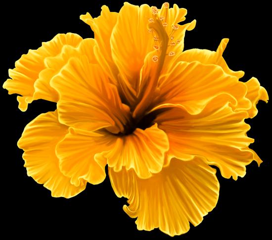 tubes_fleurs_tiram_519