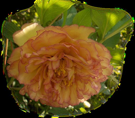 tubes_fleurs_tiram_177