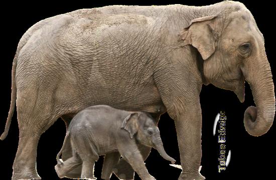 tubes_elephants_tiram_41