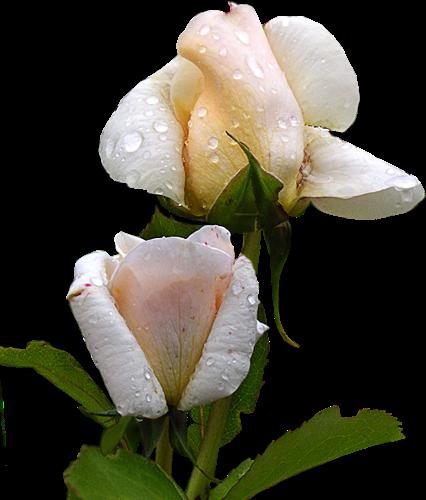 tubes_fleurs_tiram_660