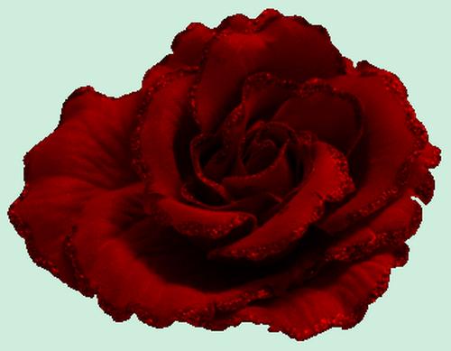 tubes_fleurs_saint_valentin_tiram_2