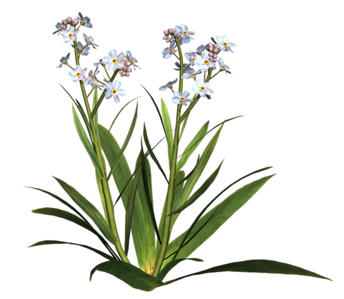 fleurs_paques_tiram_139