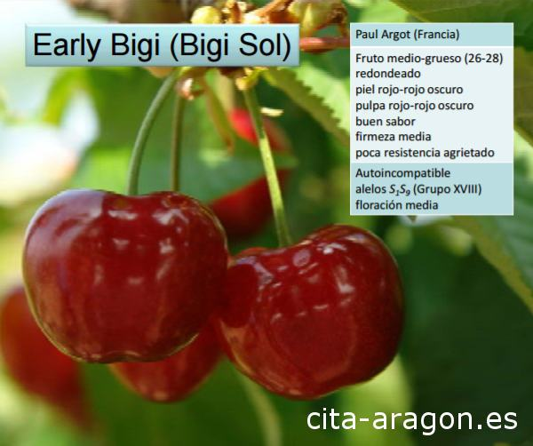 Variedad de Cereza Early Bigi. Cereza Bigi Sol
