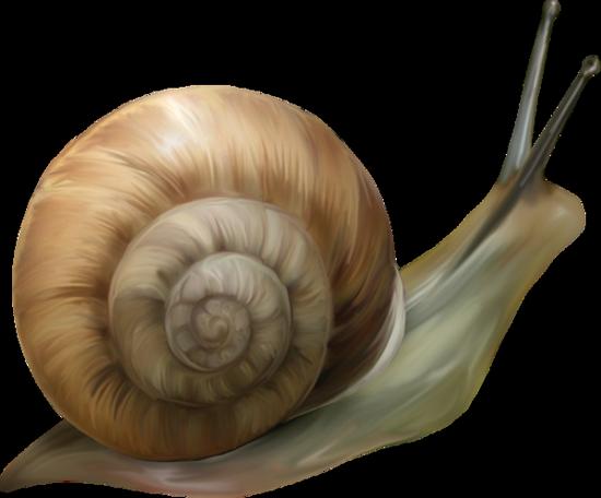 tubes_escargots_tiram_163