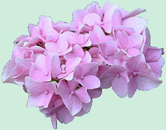tubes_fleurs_tiram_525