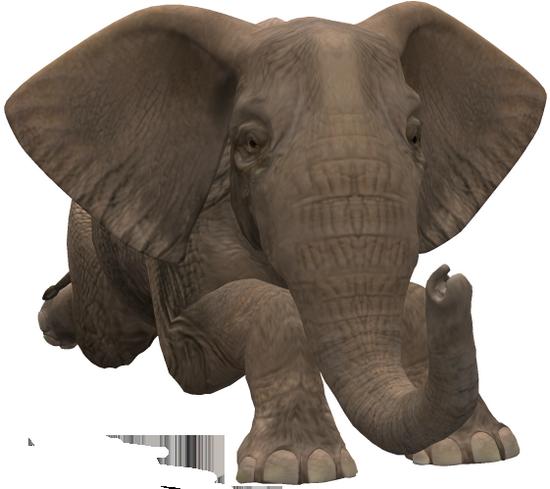 tubes_elephants_tiram_508