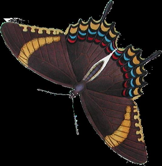 tubes_papillon_tiram_803