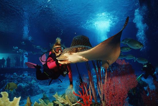 Snorkelling at Walt Disney World