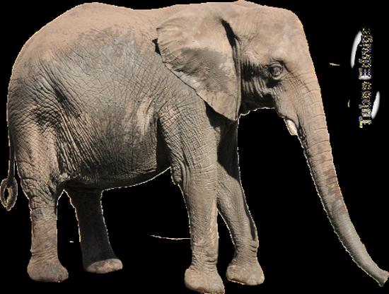 tubes_elephants_tiram_39