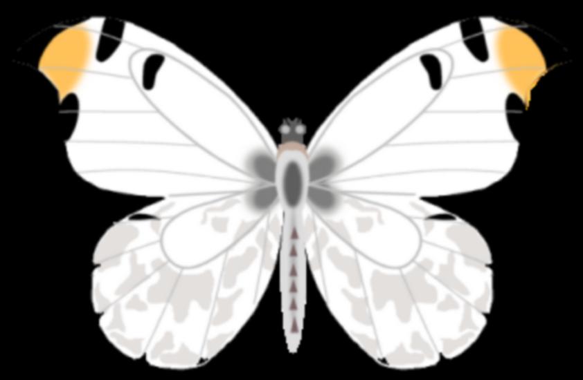 tubes_papillon_tiram_563