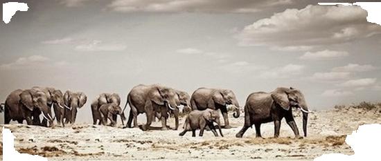 tubes_elephants_tiram_236