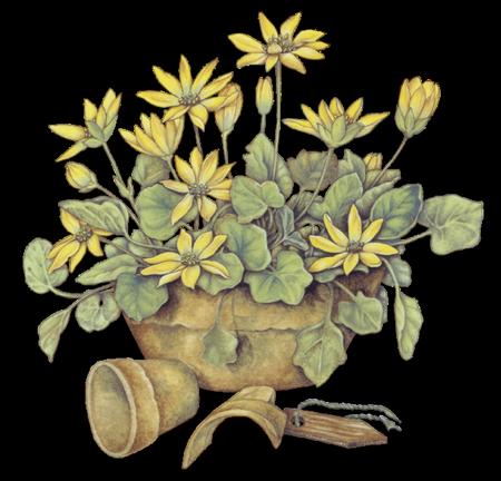 tubes_fleurs_tiram_914