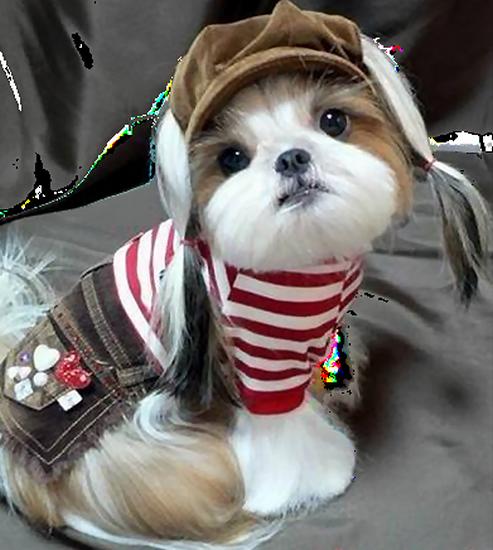 chien_tiram_438