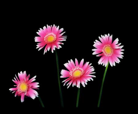 tubes_fleurs_tiram_906