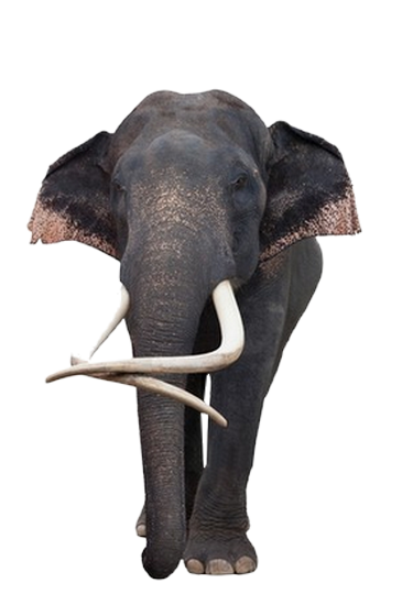 tubes_elephants_tiram_56