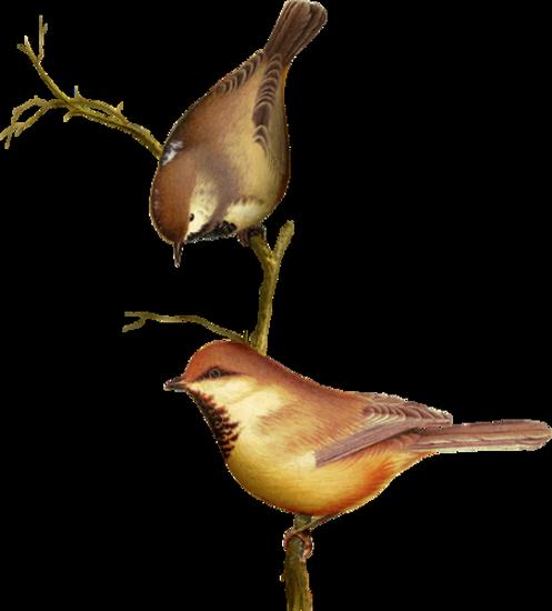 tubes_oiseaux_tiram_131