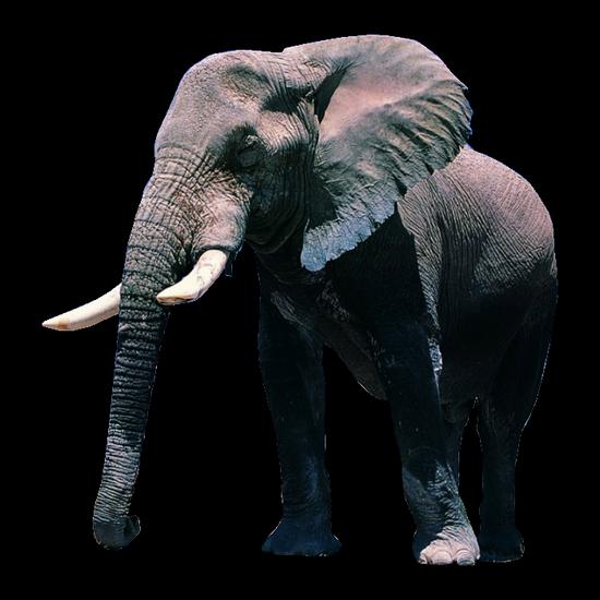 tubes_elephants_tiram_562