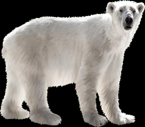 animaux-noel-tiram-122