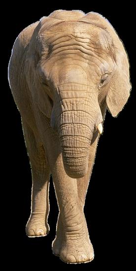 tubes_elephants_tiram_51