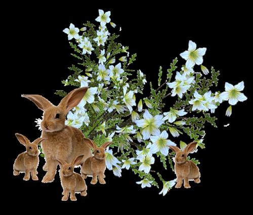 lapins_paques_tiram_372