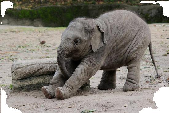 tubes_elephants_tiram_285