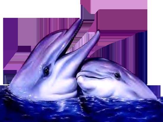 tubes_dauphins_tiram_124