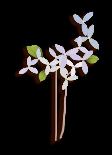 fleurs_paques_tiram_70