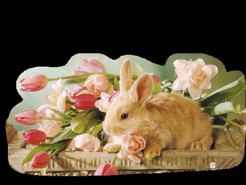 lapins_paques_tiram_1132