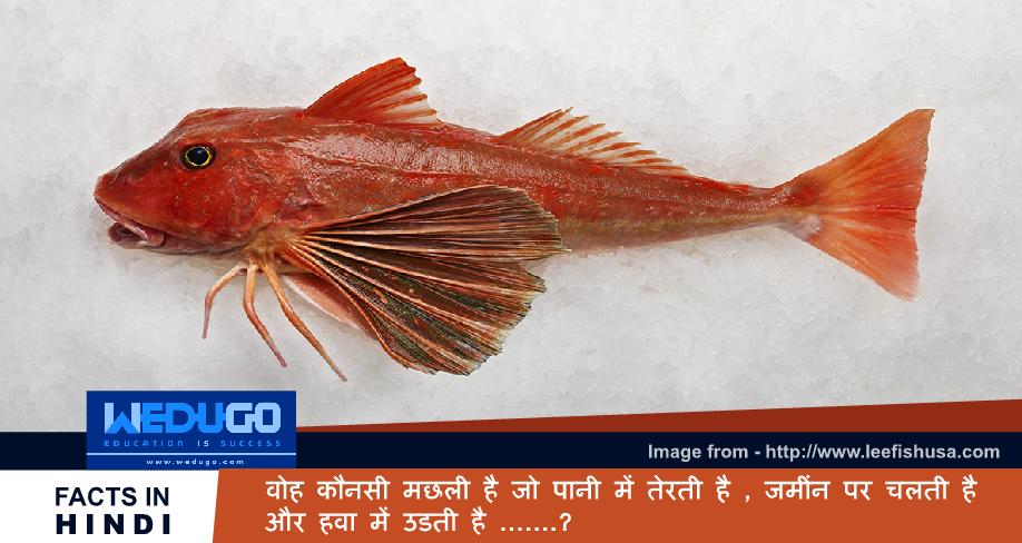 वोह कौनसी मछली है जो पानी में तेरती है , जमीं पर चलती है और हवा में उडती है - Important General Knowledge Questions for competitive exam