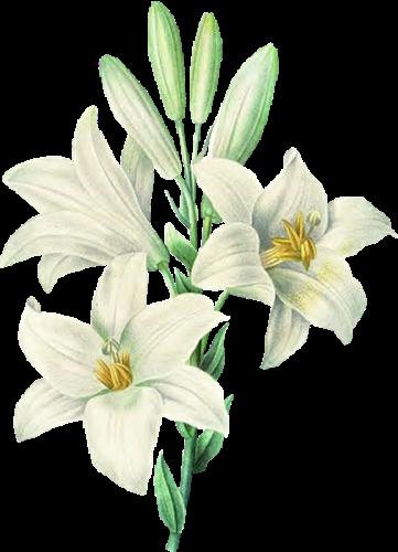 tubes_fleurs_tiram_706