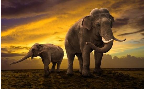 tubes_elephants_tiram_451