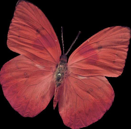 tubes_papillon_tiram_144
