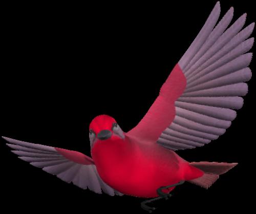 tubes_oiseaux_tiram_214