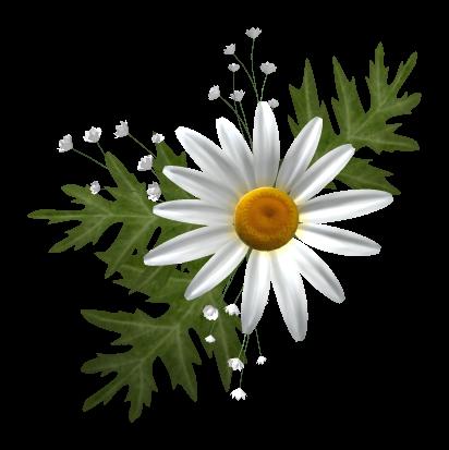 tubes_fleurs_tiram_696