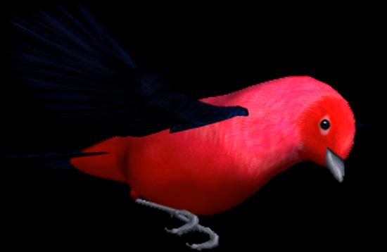 tubes_oiseaux_tiram_204