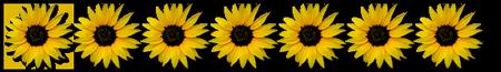 tubes_fleurs_tiram_912