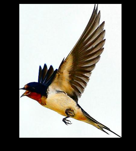 tubes_oiseaux_tiram_223