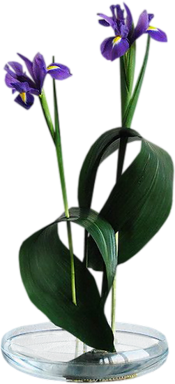 tubes_fleurs_tiram_414