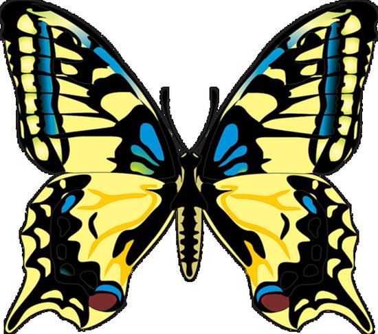 tubes_papillon_tiram_274