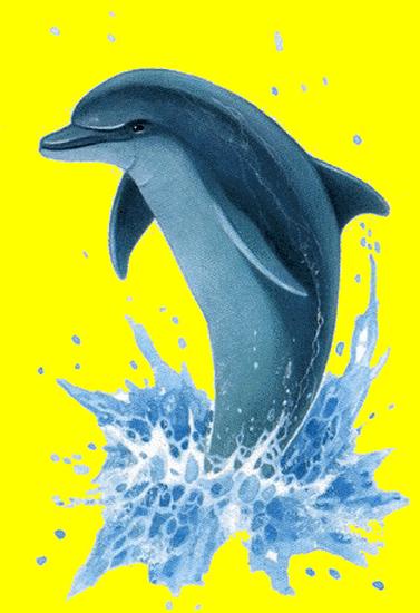 tubes_dauphins_tiram_0