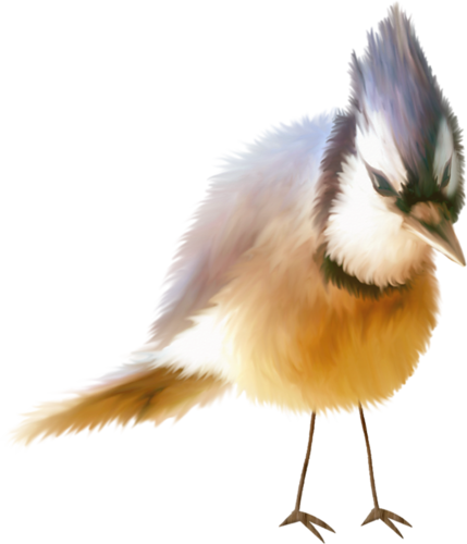 tubes_oiseaux_tiram_28