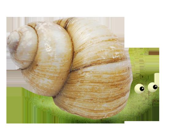 tubes_escargots_tiram_192