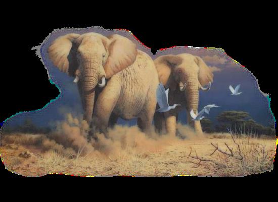tubes_elephants_tiram_132