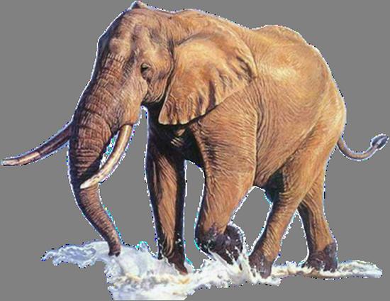 tubes_elephants_tiram_237