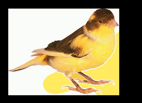 tubes_oiseaux_tiram_201